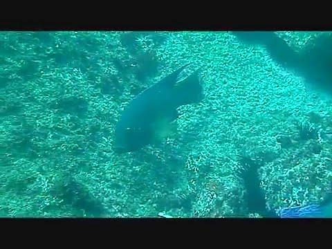 Mergulho na Laje de Santos 25/03/2012