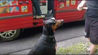 Doberman excited for ice cream truck, does tricks for popsicle