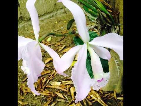 FLOWER-#flower #blossom #nature #plant #beautiful #color #pretty #garden #petal #flowers ##nature_