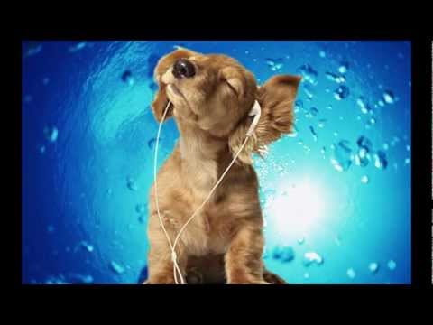 Songs For Dogs - Classical RELAXATION Music DESIGNED for your Dog - Reverie