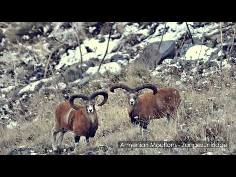 Wildlife of Armenia Music Videos