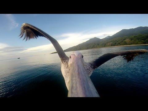 GoPro: in Volo con un Pellicano