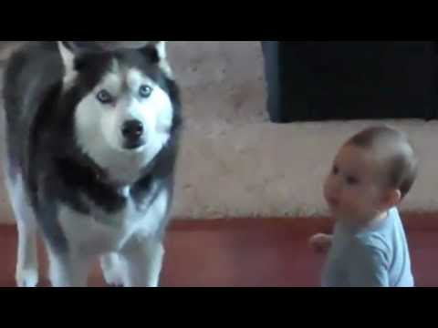 Haski peva sa bebom