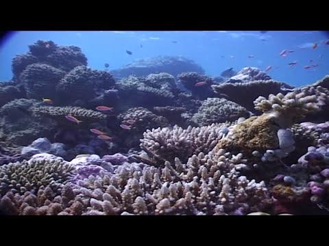 Maldivas: el paraíso del buceo (documental completo)