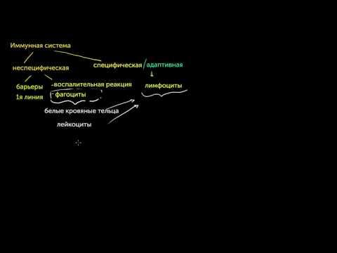 Типы иммунных ответов: врожденный и адаптивный. Сравнение гуморального и клеточного иммунитета