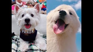 Cute and funny animals Videos - Global Animals channel #1