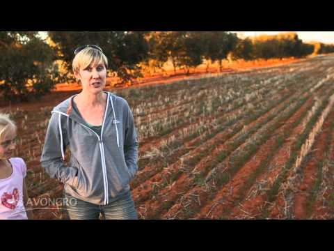 Western Australian tree farmers stories - Andrew and Suzi Sprigg of Wialki