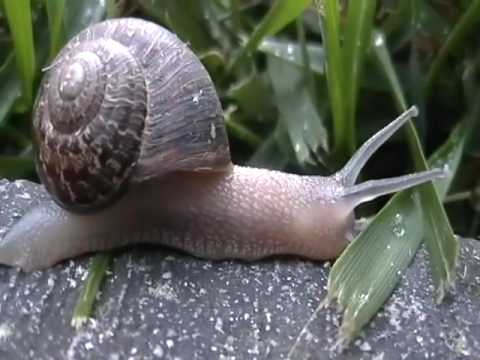 Two Garden Snails - Exploring and Eating (Piano Improv)