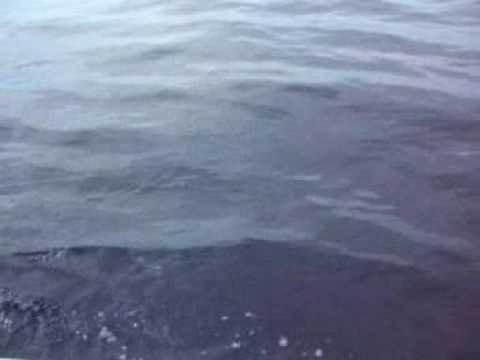 Necmi Ton on Pacific Ocean sailfish fishing