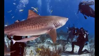 Underwater World, Singapore, Best Travel 2018