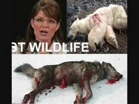 Sarah PALIN is the MICHAEL VICK on HUMAN & ANIMAL Rights... Video
