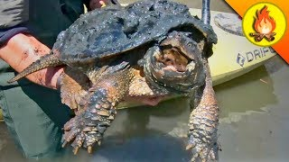 It All Began with a Snapping Turtle!