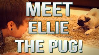 TDM Vlogs | MEET ELLIE THE PUG! | Episode 17
