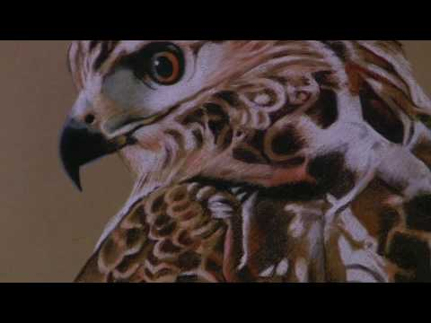 The Birds of Marvin Triguba