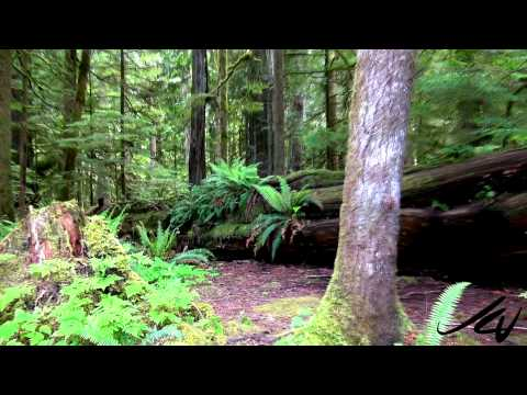 Old Growth Forest -  Lesson in Life -  YouTube