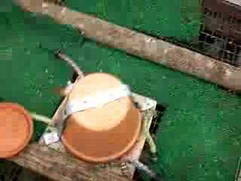 backyard chicken coop water heater