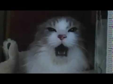gatos enojados