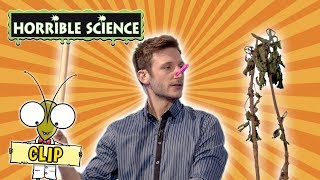 Horrible Science - Mark and His Plant | Learn About Plants | Science for Kids