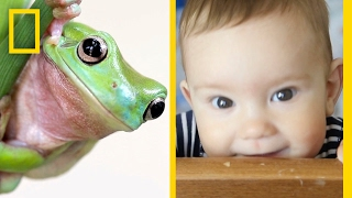 What Does a Frog's Face Have in Common With Yours? | National Geographic