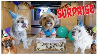I THREW MY DOG A BIRTHDAY PARTY!!