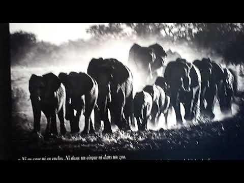 RÈG TANULTAM...SEGITETT A SZAKEMBER.LOXODONTA AFRICANA./AFRIKAI ELEFÁNT/