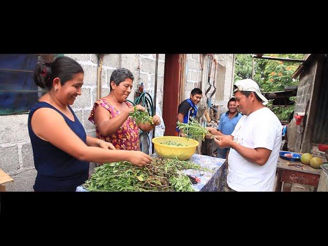 Yo Muevo a México - Prospera, Huertos de Traspatio