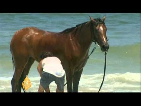 Gaza Horse Club