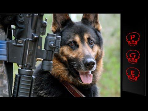 Perros soldados. Auténticos héroes