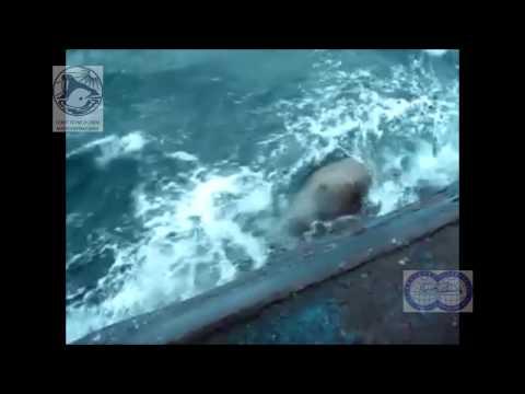 нападение касаток на лодки