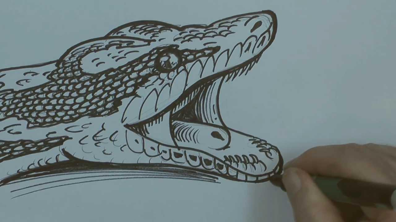 Python drawing - photo#27