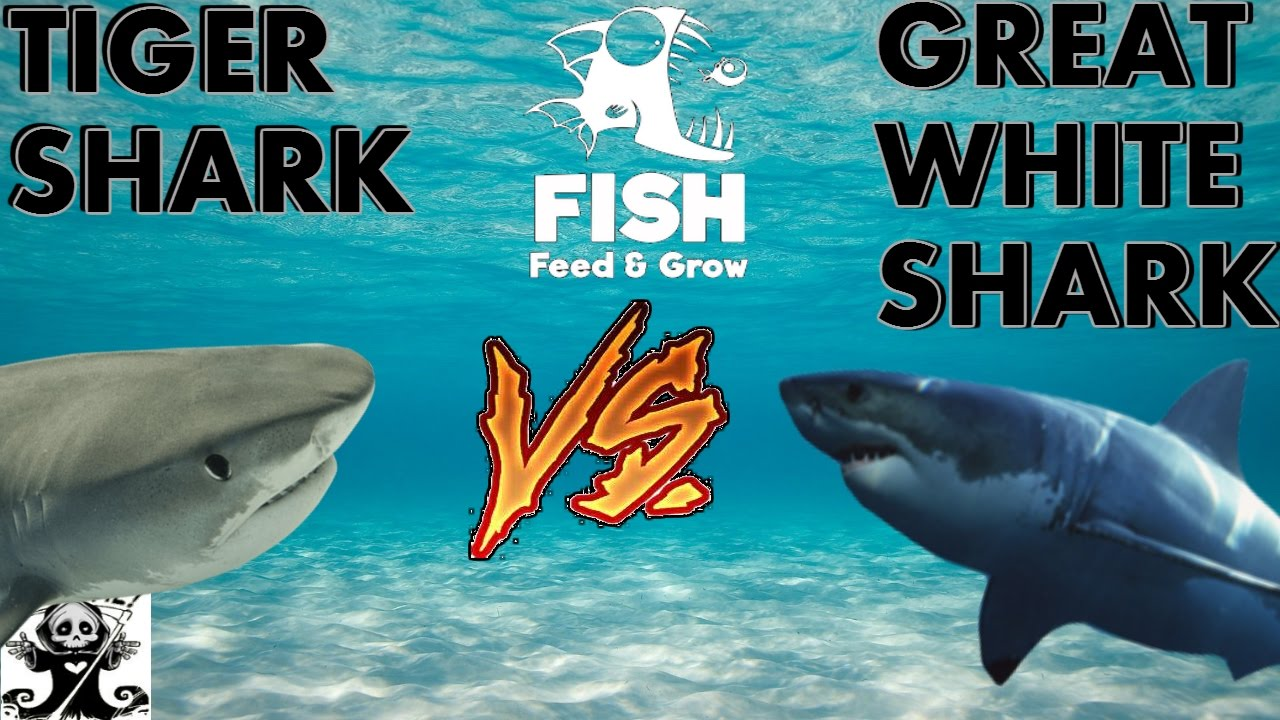 Great white shark vs bull shark