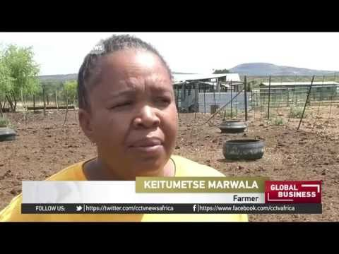 South Africa farmers sell livestock as government grants emergency aid