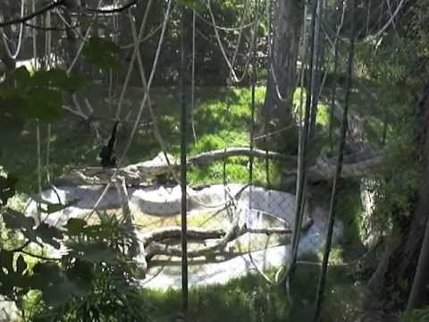 Chafee Zoo in Fresno Ca-A Wild life Walking tour