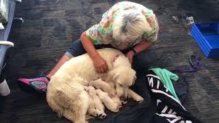 download musica Olha o que esta cadelinha fez no aeroporto