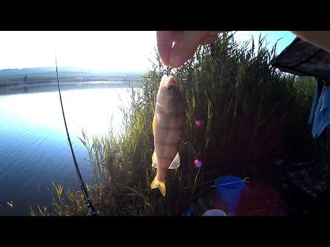 клев рыбы в ровно