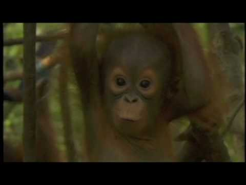 Orangutan Outreach PSA - Jorja Fox