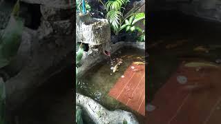 My home made koi pond in sanfernando cebu
