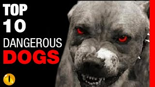 TOP 10 DANGEROUS DOG BREEDS