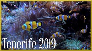 Holiday Tenerife January 2018