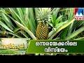 Medicinal Plants Mahkotta Deva In Nattupacha  Manorama News