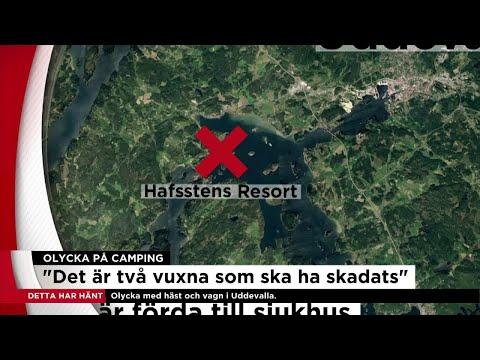 Flera förda till sjukhus efter att häst skenade på camping - Nyheterna (TV4)