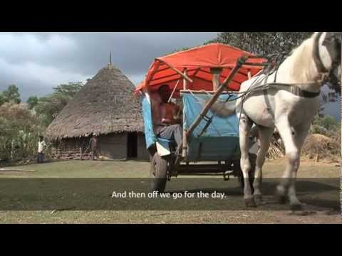 Ghari Horse Owner Asscoiciation in Ethiopia - Ghari Horse Owner Asscoiciation making Positive change
