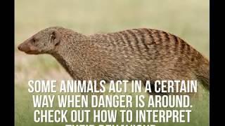Some Animals Act In A Certain Way When Danger Is Around | Dainik Bhaskar