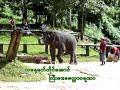 Myanmar karaoke Song 05 (Pwo Kayin )