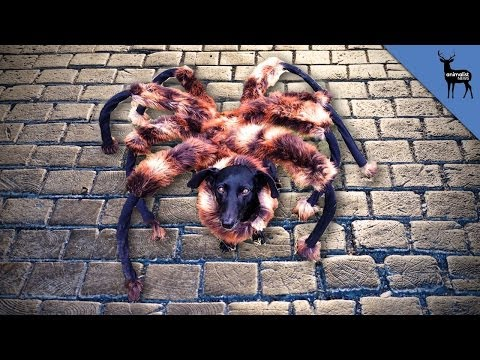 Mutant Giant Spider Dog Real Youtube