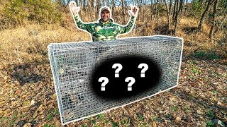 Using WORLDS LARGEST Animal Trap in My BACKYARD!! (Surprising Catch!)