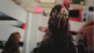 Des poules sur Sainte-Catherine pour la F1
