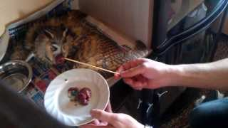 Чем кормить сову сплюшку в домашних условиях