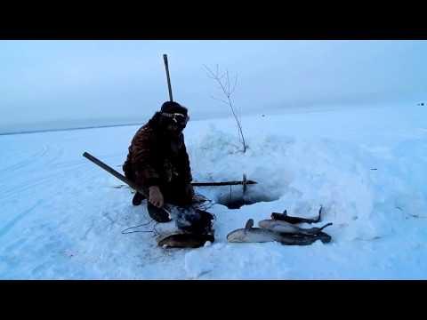 рыбалка в свердловской области на налима видео