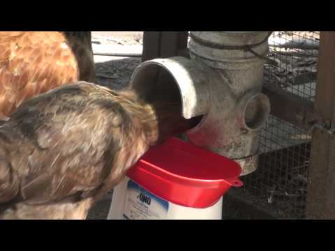 Stop Waste From Chicken Feeder DIY Catch Device for PVC